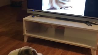 Dog confused by sleeping puppy on tv