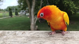 Colorful parrot won't let owner stop petting him