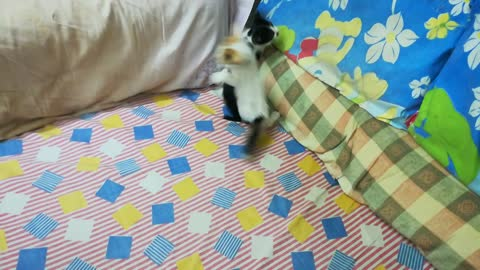 Kitties Play Submissions On Bed