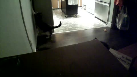 Luna greets me at the door every day when I get home so I decided to film her