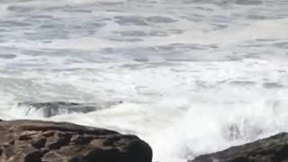 Guy standing on rocks with surfboard gets knocked over by big wave - Video