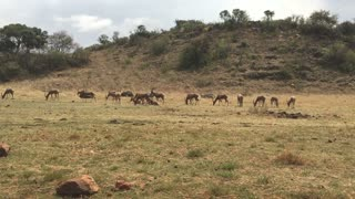 Africa Wilderness Deers Family Hanging Out