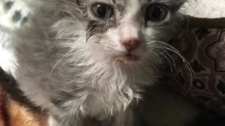Little small kittie crying - Video