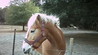 Funny reaction of a horse - Video