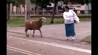 Grumpy Billy Goat Terrorizes Town - Video