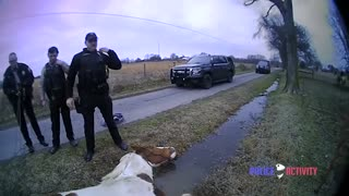 Police Help Save Horse Stuck In A Ditch
