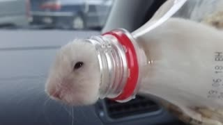 Bottled Hamster - Video