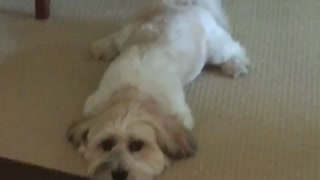 Dog Is Still.....Except for Her Tail! - Video