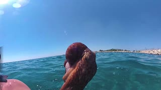 Octopus Catch - Video