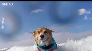 Dog Uses Surfing As Therapy After Injury - Video