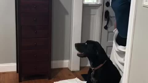 """Dog Proves To Be Too Smart For """"What The Fluff"""" Challenge"""