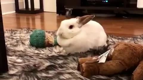 A Rabbit Turns on His Back on The Carpet.