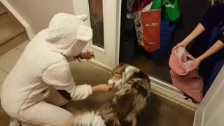 Dog helps hand out Halloween candy