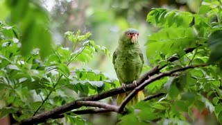 Green Birds Perched on Tree Branch