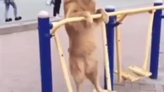Dog having fun! - Video