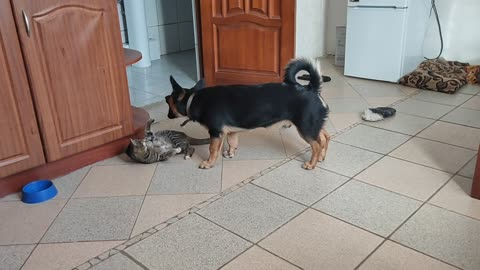 The reaction of the cat and dog to the call of the owner