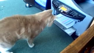Cat tryin to fight a printer