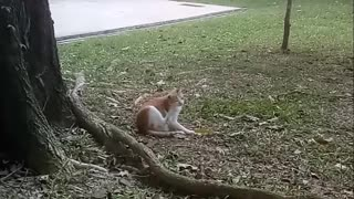 When the cat itchy - Video