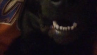 Girl red shirt black dog lay mouth open
