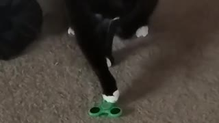 Black cat playing with green fidget spinner