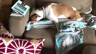 Dog hiding bone with her favorite blankie  - Video