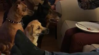 Three dogs stare at man on couch eating pizza