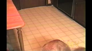 Dog Raises Paw When Asked If She Wants A Treat - Video