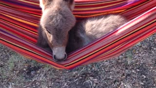 Rockabye Pistol Pete In The Hammock - Video