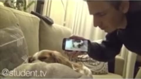 Watch What Happens When Pet Views Owners Footage Of It Snoring