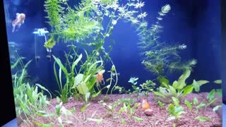 Time lapsed fish tank  - Video