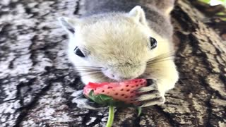 Happy Tree Squirrels Munch on Fruit