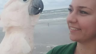 Cockatoo Loves the Ocean More than Anything