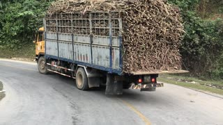 Kids Stealing Sugarcane from a Moving Truck - Video