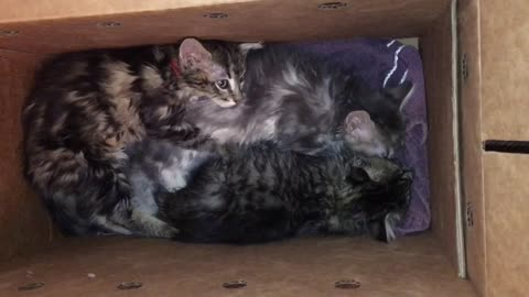 Jack, Chrissy, and Janet form a post-surgery cuddle-puddle!