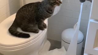 Troublesome Kitty Uses the Whole Roll