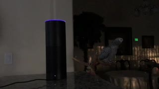 "Parrot Tells Amazon Alexa ""I Love You"" - Video"