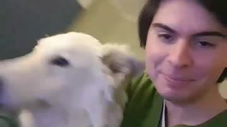 Big white dog turns quickly and hits guy in green shirt in face - Video