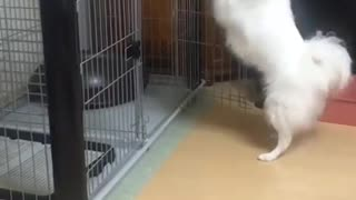 Look how this Dog is Dancing with His Hands