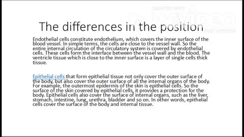 The differences between epithelial cells and endothelial cells