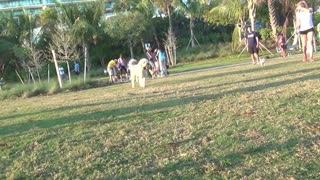 Dog Park in Miami Beach - Video