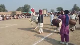 Awesome trained horse dance in pakistan  - Video