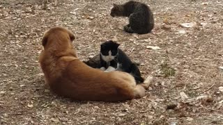 Stray cats give doggy loving massage