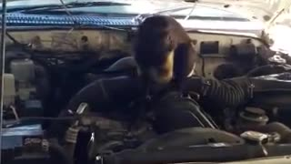 monkey mechanic - Video