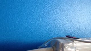 Blue wall - Video