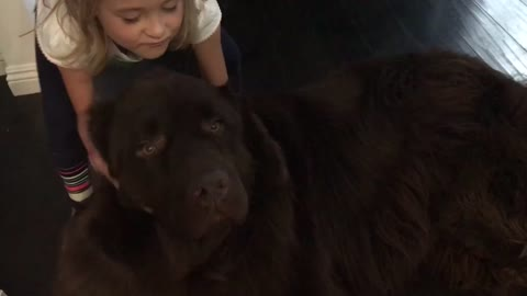 Little girl stopped from leaving by her huge puppy