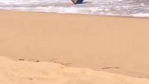 Guy with blue boogie board gets knocked down by wave