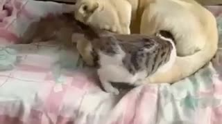 This Cat Loves Getting A play Before Bedtime!