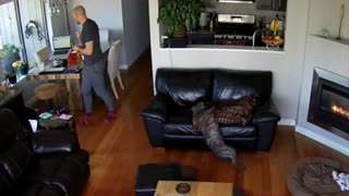 Sleepy Dog Is Too Tired To Move After He Falls Off Couch  - Video