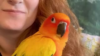 Parrot literally laughs out loud at his owner's joke