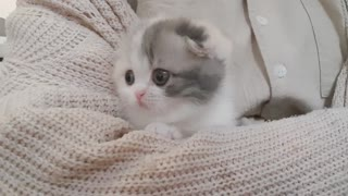 Cute Little Kitten that will make your day